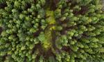 Lasy Państwowe obarczone biurokracją