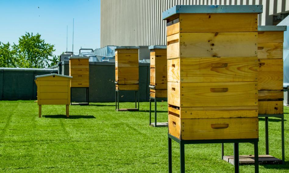 Naukowcy: Zakładanie pasiek miejskich może szkodzić rodzimym gatunkom pszczół