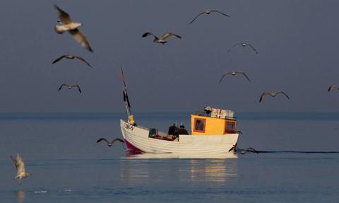 Kraje UE porozumiały się ws. limitów połowów ryb na Morzu Bałtyckim na 2021 r.