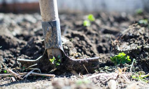 W Kazachstanie nie będzie sprzedaży ziemi rolnej cudzoziemcom