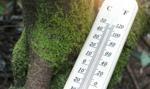 Niezahamowanie zmian klimatycznych to koszt 43 bln dol.