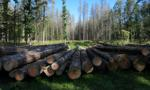 Ogromne zagrożenie pożarowe w Puszczy Białowieskiej
