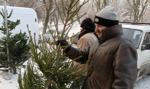 """Akcja """"Choinka-18"""": leśnicy sprawdzają, czy sprzedawane choinki pochodzą z legalnych źródeł"""