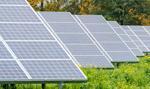Energa planuje wybudować farmę fotowoltaiczną Gryf o mocy 19,83 MW
