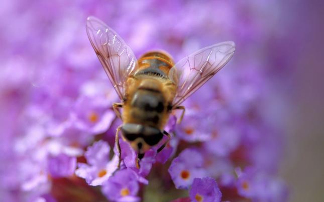 Przybywa leśnych pszczół w barciach w pn.-wsch. Polsce