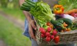 Państwowa sieć sklepów spożywczych nie, ale synergia na rynku owoców i warzyw