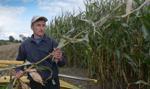 ARiMR: ponad milion rolników dostało zaliczki na poczet dopłat bezpośrednich