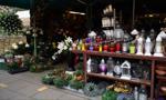 Premier: Odkupimy kwiaty i rośliny