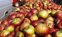 Rosjanie spalili polskie jabłka