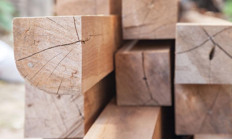 Branża drzewna: konieczny zakaz eksportu drewna, inaczej wiele firm upadnie