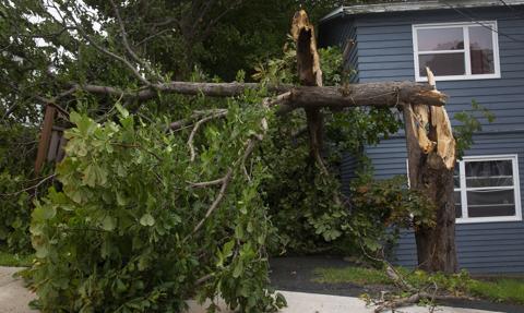 Huragan Larry uderzył w Kanadę. Wyrywa drzewa w Nowej Fundlandii