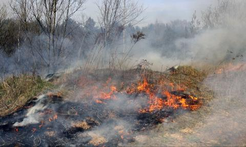 Za uporczywe wypalanie traw rolnik może stracić dopłaty