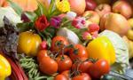 Polski eksport owoców i warzyw w 2015 r. mniejszy niż rok wcześniej