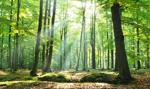 16 mln zł na rewitalizację trzech warszawskich parków