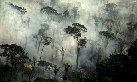 Raport: W 2020 r. zniszczono obszar lasów deszczowych wielkości Holandii