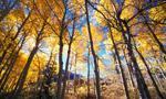 Sadzenie drzew na cudzych działkach może być kosztem uzyskania przychodu