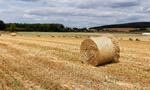 Zaliczki dopłat bezpośrednich: 4,5 mld zł dla ponad 900 tys. rolników