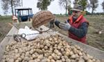 GUS: w styczniu większość produktów rolnych podrożała; najbardziej ziemniaki