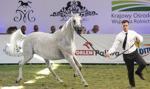 Prawie 1,6 mln euro za konie na aukcji Pride of Poland