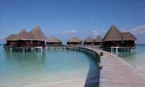 Darmowy urlop na Malediwach? Tak, ale trzeba pomóc ratować żółwie