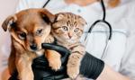 Ubezpieczenie psa i kota – gdzie kupisz i ile kosztuje?