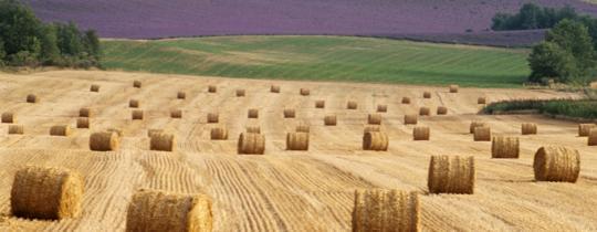 Inwestycje w grunty rolne coraz bardziej opłacalne