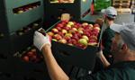 Szwedzka sieć marketów wycofuje polskie jabłka