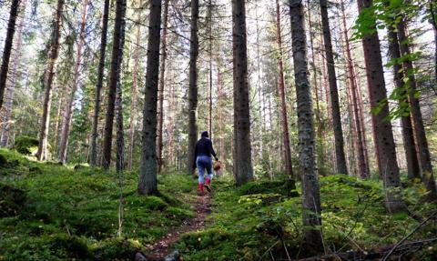 """PiS sprywatyzuje Lasy Państwowe? """"Zamiana gruntów leśnych ma być wyjątkiem"""""""