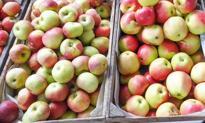 Co Ty wiesz o jabłkach? #BPBquiz