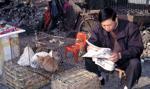 Miasto Shenzhen zakazuje jedzenia psów i kotów
