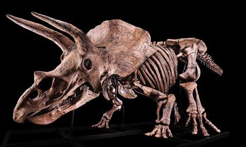 Szkielet największego odkrytego triceraptosa sprzedany za 6,6 mln euro. To europejski rekord