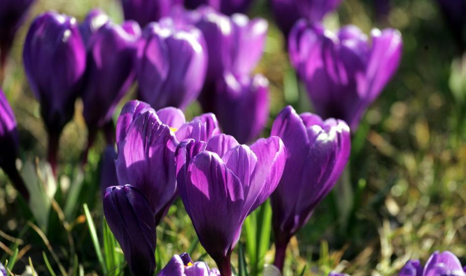 PMI: do europejskiej gospodarki zawitała wiosna
