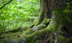 KE wskazuje ekologiczny kierunek dla UE. Zwiększy się udział obszarów chronionych