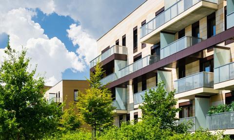 Prawo sąsiedzkie: problem z drzewami na nieruchomości sąsiada