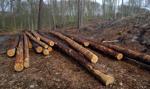 PiS miał ograniczyć masową wycinkę drzew, ale projekt utknął w komisji