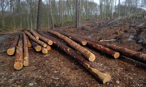 KE zaakceptowała polskie wsparcie dla firm w sektorze drzewnym