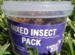 Pomysł na biznes: sprzedaje owady jak ciepłe bułeczki