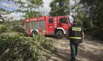 Lasy Państwowe: uprzątanie terenów dotkniętych nawałnicami potrwa do 2019 r.