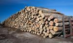 Sejm przeciw odrzuceniu ustawy ws. drewna energetycznego