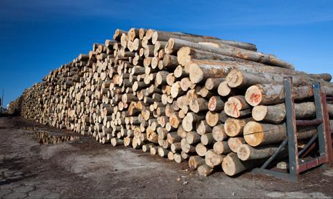 Duża energetyka nie jest zainteresowana drewnem z Lasów Państwowych