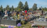 1,9 mln zł kary dla parafii za nielegalne wycięcie 269 drzew