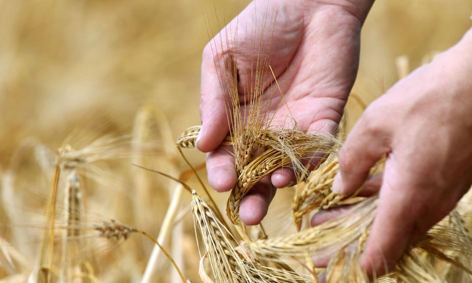Rząd przyjął przepisy wspierające rolników