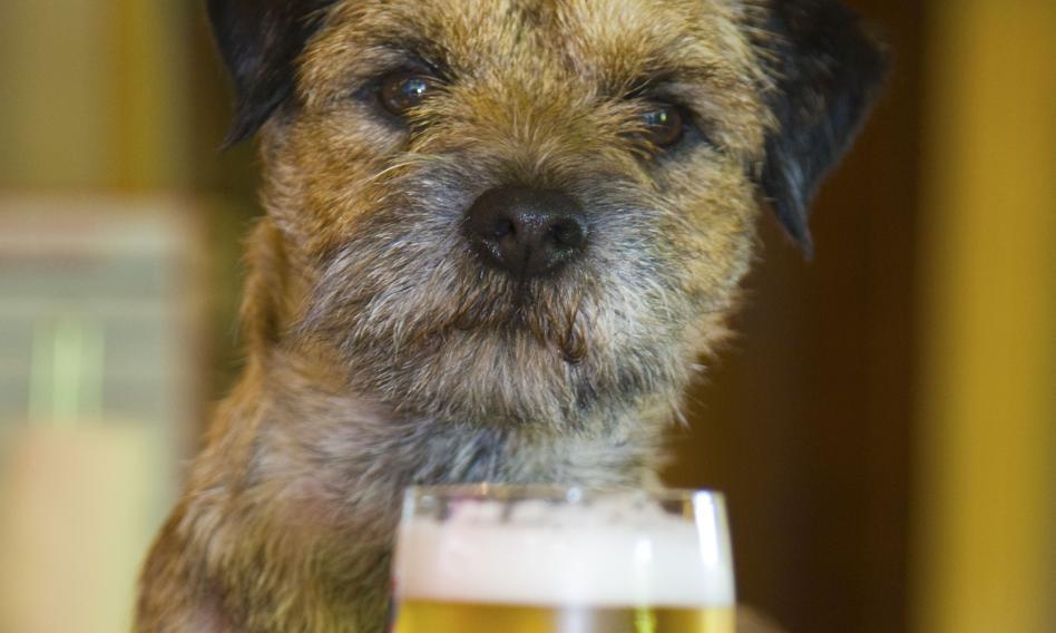 Piwo dla psów, by i one miały coś z wizyty w pubie