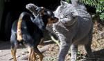 Barcelona: zakład krawiecki dla zwierząt