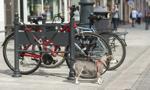 Miasta, które nadal pobierają opłatę za psa
