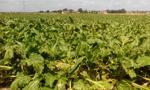Projekt: minister aktywów ma wykonywać prawa z akcji SP w spółkach rolnych