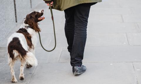 Opłata za posiadanie psa będzie wyższa