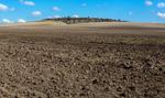 Sawicki: susza jest dotkliwa, straty w rolnictwie oszacowano na ponad 1 mld zł