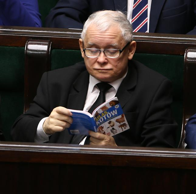 """Jarosław Kaczyński zaczytany w """"Atlasie kotów"""""""