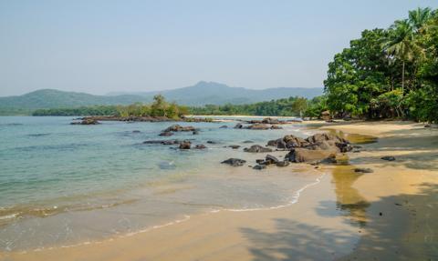 Chiny zbudują port w miejscu lasu deszczowego w Sierra Leone